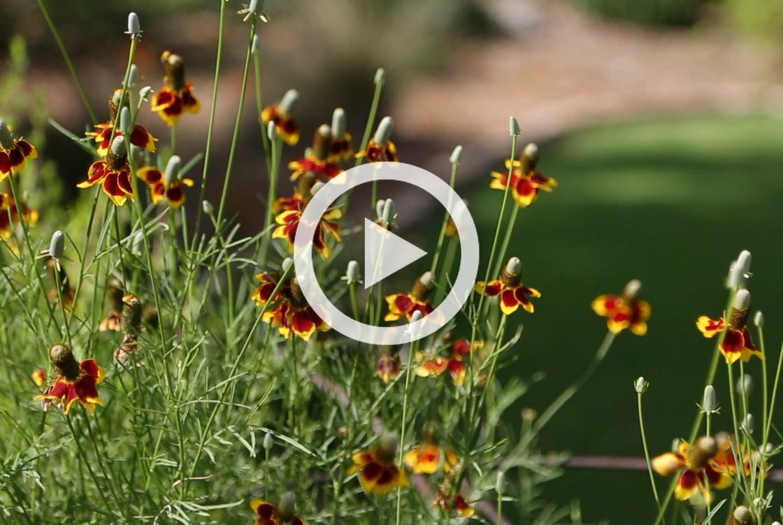 ShabbatShalom_Garden
